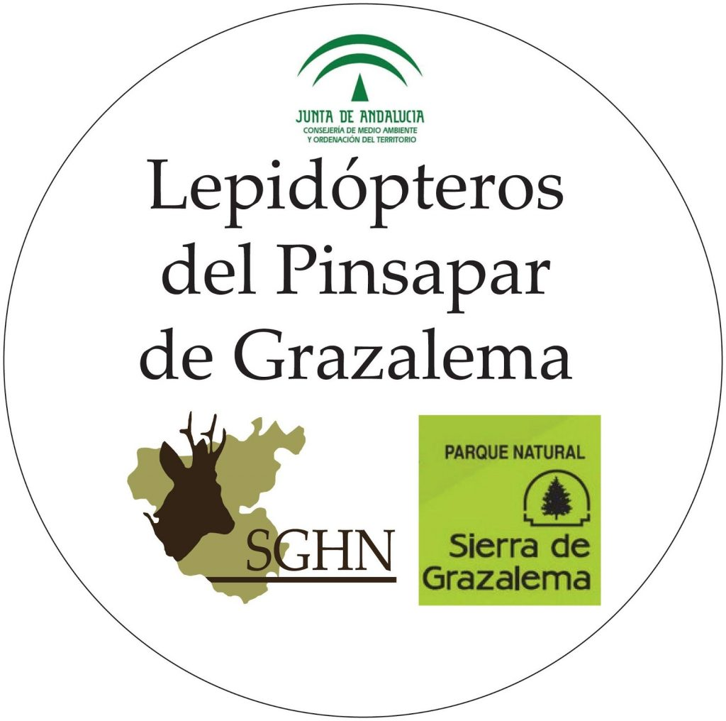 Lepidópteros del Pinsapar de Grazalema