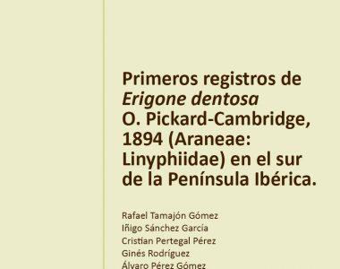 Primeros registros de una araña exótica en el sur peninsular