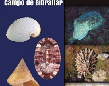 La Guía de Moluscos del Campo de Gibraltar online!!