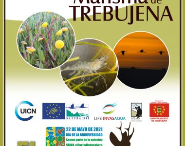 "El informe del ""VI Bioblitz SGHN-Marisma de Trebujena"" en El Corzo."