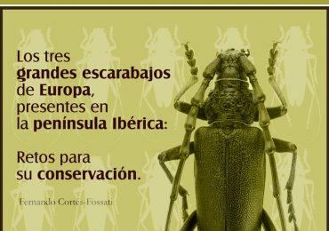 Nuevo artículo en El Corzo sobre los grandes escarabajos ibéricos.